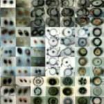 http://www.penelopeumbrico.net/files/dimgs/thumb_1x150_2_42_2526.jpg