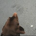http://www.penelopeumbrico.net/files/dimgs/thumb_1x150_2_54_769.jpg